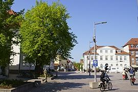 Friedenslinde in Ratzeburg
