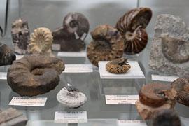 Fossilien Eiszeitmuseum Lütjenburg