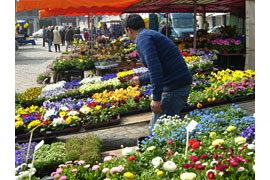 Frühlingserwachen auf dem Markt in Neustadt in Holstein