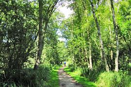 Wanderweg an der Aalbeek in Timmendorfer Strand/Niendorf