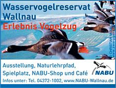 Wasservogelreservat Wallnau auf Fehmarn