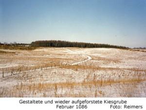 aufgeforstete Kiesgrube am Dummersdorfer Ufer