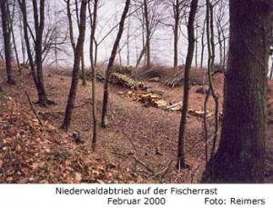 Niederwaldabtrieb auf der Fischerrast am Dummersdorfer Ufer