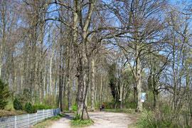 Wanderweg im Seetempel-Wäldchen in Lübeck-Travemünde