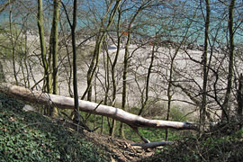abgestürzter Baum im Seetempel-Wäldchen in Lübeck-Travemünde