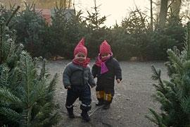 Tannenbaumverkauf auf Gut Stockseehof